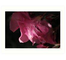 Oleander Glory Art Print