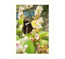 Cemetery Butterfly Art Print