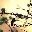 humming bird in sepia by Bonnie Pelton