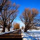 Country Road in Heber by JoAnn Glennie