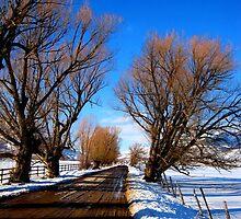 Country Road in Heber by JoAnn Glennie