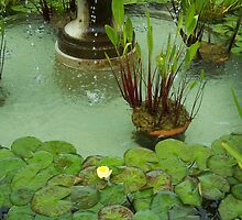 Water Lillies in the Park by Mardra