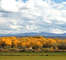 Northern New Mexico by Denice Breaux