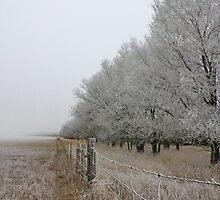 One Treeline Closer to Forever by Rachel Sonnenschein