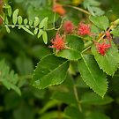Plant with insect galls  by Irina777