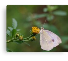 Insect Eating Canvas Print