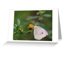 Insect Eating Greeting Card