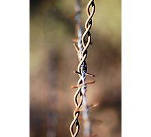 Rustic Barbwire Photographic Print