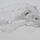 Weasel head side view pencil drawing by MikeJory