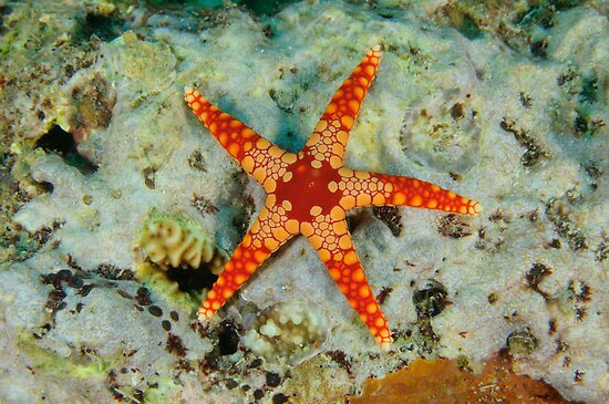 Sea Star by Andrew Trevor-Jones