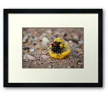 Lonesome Rubber ducky Framed Print