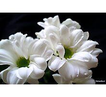 Bloomin' Beautiful Photographic Print