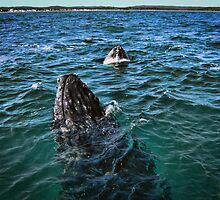 Having a Whale of a Time, in Australia by billypump