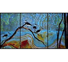 Four Ibis Photographic Print