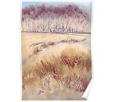 Grasses on Strensall Common Poster