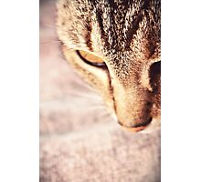 Oh little Tabetha, you are a nosy kitty.  Photographic Print