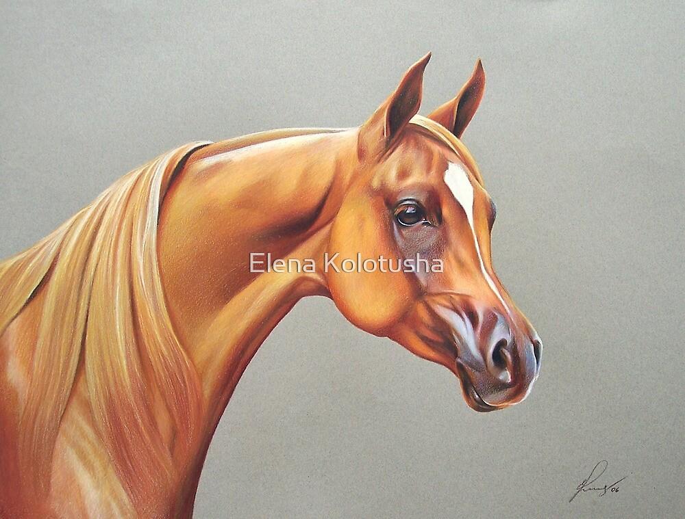 """""""Arabian horse study"""" by Elena Kolotusha"""
