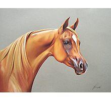 """Arabian horse study"" Photographic Print"