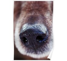 Close-up of a dogs nose Poster