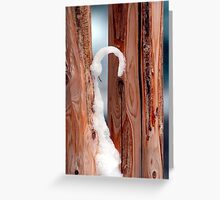 Sno Cane Greeting Card