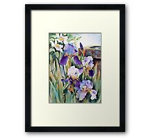 Irises and Clematis Framed Print