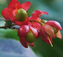 shiny berries:P by LisaBeth