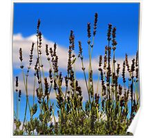 Lavender against the Sky Poster