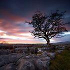 One Little Tree by Jeanie