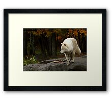 The lone leader Framed Print