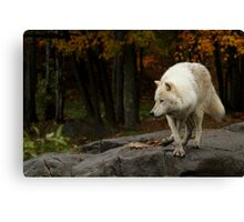 The lone leader Canvas Print