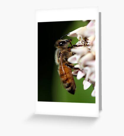Honeybee Macro Greeting Card