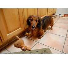 Dachshund and Toys Photographic Print