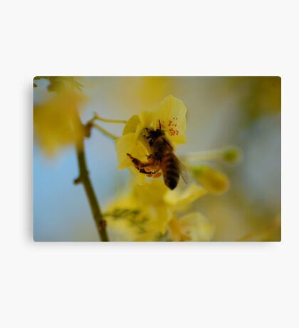 Pollen Gatherer Canvas Print