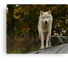 Eyes for you Canvas Print