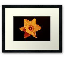 Bright Star Framed Print