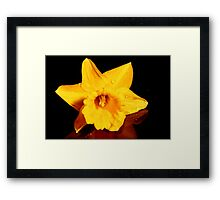 Daffodil on Reflection Framed Print