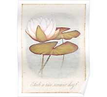 a white summer lily Poster