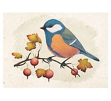 Chickadee on a branch of gooseberries Photographic Print