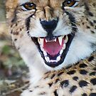Cheetah with attitude by Ted Widen