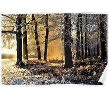 Lightplay on a hoarfrost morning Poster
