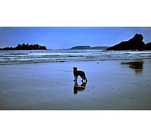The surfers devoted friend Photographic Print