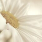 the soft touch of daisy by Angel Warda