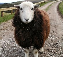 Middlesmoor Herdwick by Kat Simmons