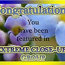 feature banner for extreme close ups group by vigor