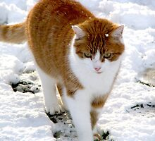 Snow Cat by Peter Ames