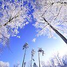 Tree party by Zuzana D Photography