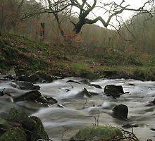 Silent Valley stream by Jane Corey