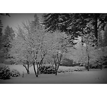 Captivating Winter Wonderland Photographic Print