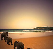 ELEPHANTS AT THE BEACH by ralphyboy