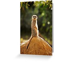 What are you looking at.......! Greeting Card